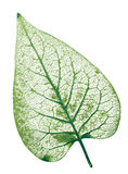 leaf vektor illustrationer