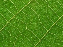 Leaf. Stock Photos