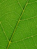 Leaf. Stock Photos
