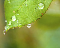 leaf 库存照片
