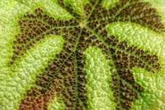 Leaf. Green detailed scructure of the leaf in horizontal composition royalty free stock images
