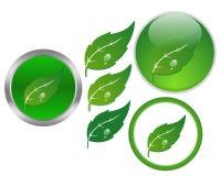 Leaf. Illustration of leaf symbol. Green life button Stock Photo