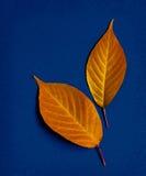 leaf Royaltyfria Bilder