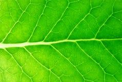 Leaf. Green leaf against slash light Stock Photos