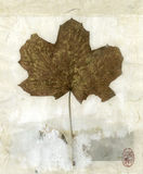Leaf. Organic leaf collaged on white stained kinwashi with red ink seal Royalty Free Stock Photography