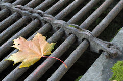 Leaf. Maple Leaf on the vents grate. Autumn Stock Photos