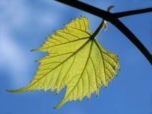 Free Leaf Royalty Free Stock Image - 191776