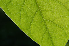 Leaf. Green leaf Stock Photo