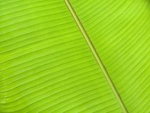 Leaf. Underside of a large leaf stock photo