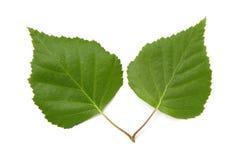 A leaf Stock Photo