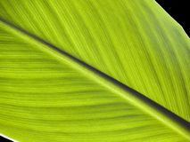 Leaf [2] Royalty Free Stock Photography