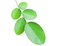 Leaf. Isolated on white background Stock Image