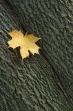 leaf Royaltyfria Bilder
