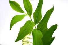 Leaf. Green-spring sun, sunny sunshine, tree royalty free stock photo