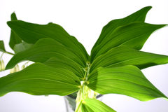 Leaf. Green-spring sun, sunny sunshine, tree stock images