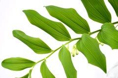 Leaf. Green-spring sun, sunny sunshine, tree stock image