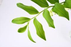 Leaf. Green-spring sun, sunny sunshine, tree royalty free stock images
