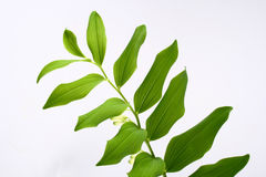 Leaf. Green-spring sun, sunny sunshine, tree royalty free stock photos
