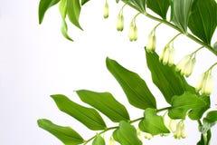 Leaf. Green-spring sun, sunny sunshine, tree royalty free stock image