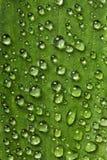 leaf στοκ εικόνες