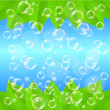 Leaf. Illustration background bubble clean and leaves Royalty Free Stock Photos