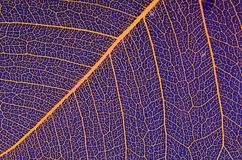 The leaf Royalty Free Stock Images