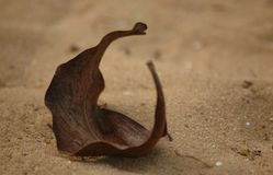 Leaf. Dry leaf on sand Royalty Free Stock Image
