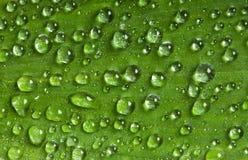 leaf στοκ φωτογραφία