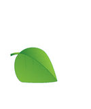 Leaf. The single leaf, it is used to many plant or add with any fruit Royalty Free Stock Image