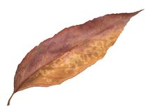 leaf Royaltyfria Foton