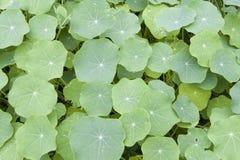 Leaf_3 Stock Images