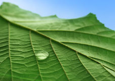 Free Leaf Stock Photos - 3119443