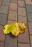 Leaf. Aceric leaf on brick sidewalk Stock Photo