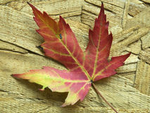 Leaf. Leaves fallen from the tree on a wooden background Royalty Free Stock Image