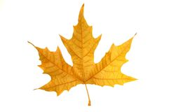 Leaf royalty free stock photography