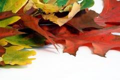 Free Leaf Stock Image - 3290901