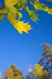 Leaf Royalty Free Stock Image