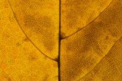 Leaf. Multicolor fallen leaf macro texture high resolution image Royalty Free Stock Image