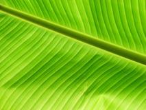 Leaf. Green leaf-detailed Royalty Free Stock Image