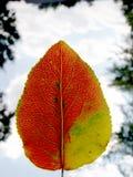 Leaf #4 Arkivfoto