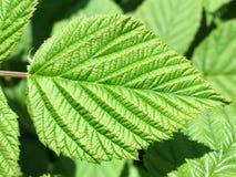 Leaf 4 stock photo
