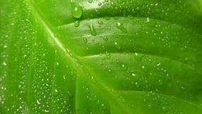 leaf lager videofilmer