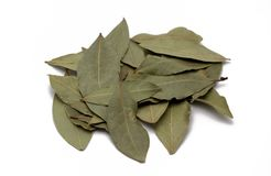 Leaf. Bay-leaf Royalty Free Stock Photo