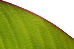 leaf Royaltyfri Fotografi