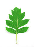 Leaf Stock Image