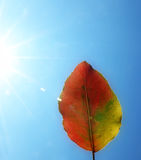 Leaf # 5. Autumn leaf against blue sky, with sunburst Royalty Free Stock Images