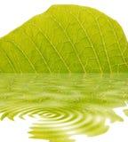 leaf Arkivfoton
