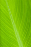 Leaf. Picture of the green leaf Royalty Free Stock Image