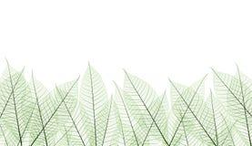 Leaf. Stem texture for background, graphic shot stock illustration