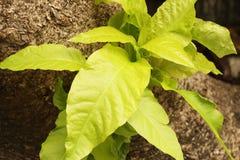 leaf fotografering för bildbyråer